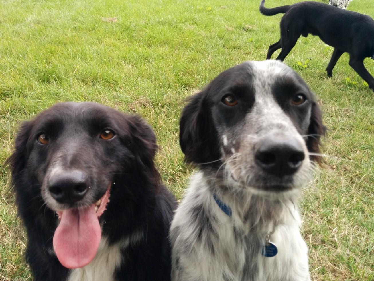 dog day care photos archives   zara s doggy day care