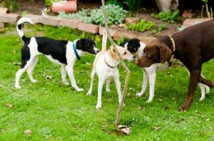 Importance of Dog Socialisation
